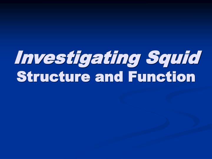Investigating Squid