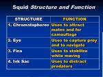 squid structure and function1