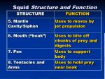 squid structure and function2