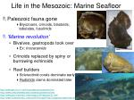 life in the mesozoic marine seafloor