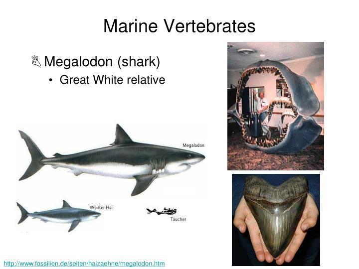 Marine Vertebrates