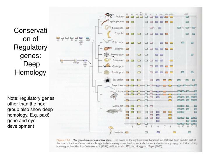 Conservation of Regulatory genes: