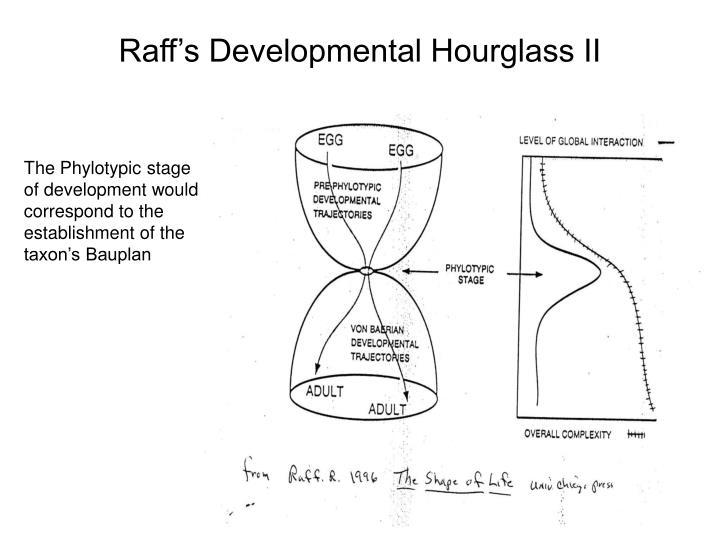 Raff's Developmental Hourglass II