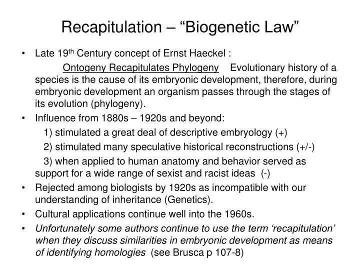 "Recapitulation – ""Biogenetic Law"""