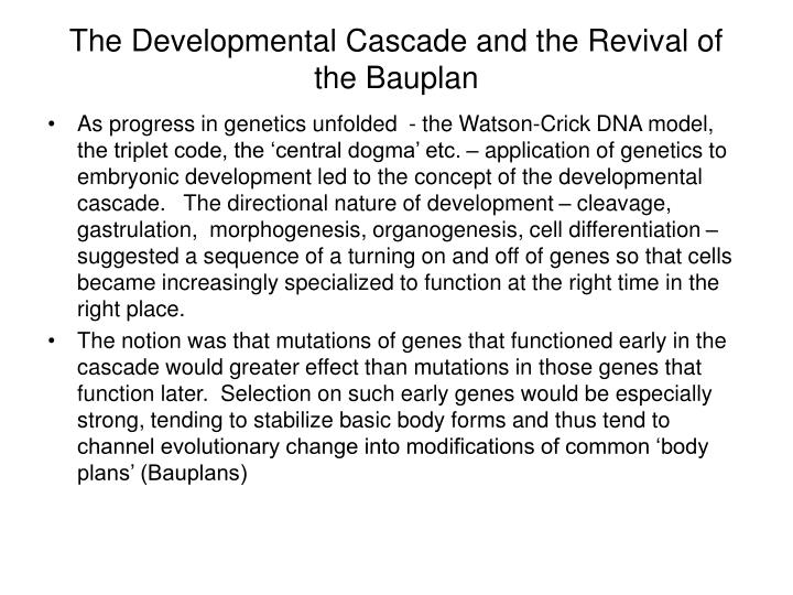 The Developmental Cascade and the Revival of the Bauplan