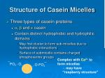 structure of casein micelles