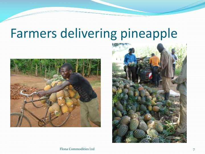 Farmers delivering pineapple