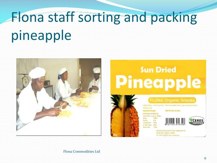 Flona staff sorting and packing pineapple
