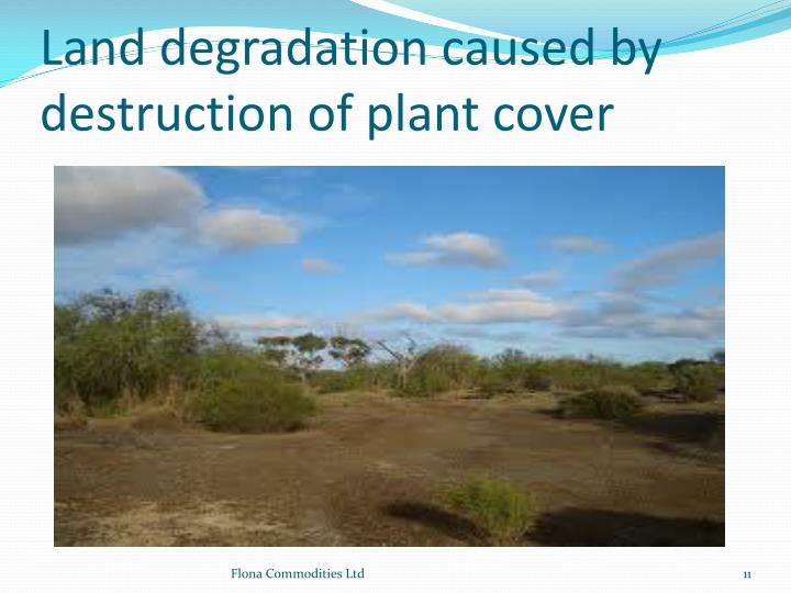 Land degradation caused by destruction of plant cover