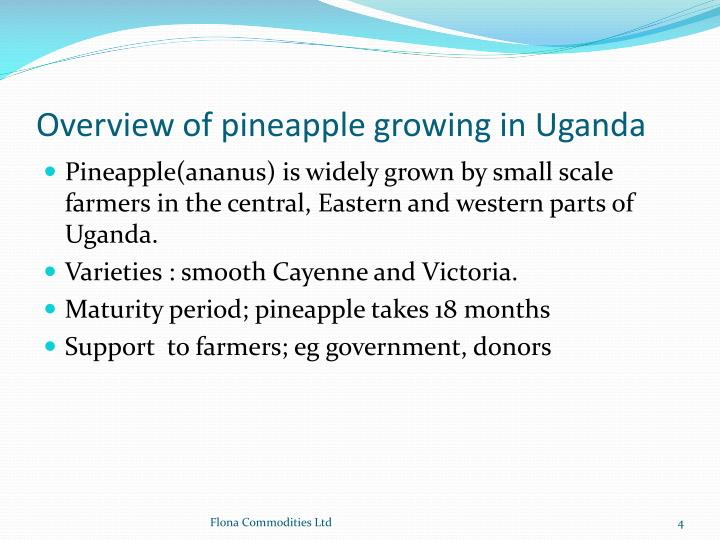 Overview of pineapple growing in Uganda
