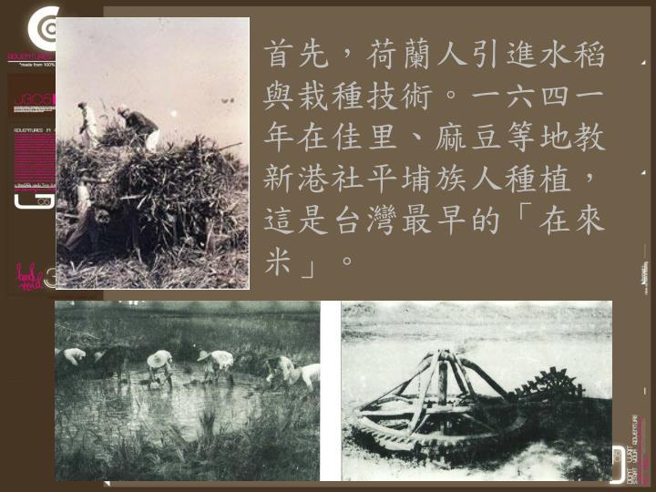 首先,荷蘭人引進水稻與栽種技術。一六四一年在佳里、麻豆等地教新港社平埔族人種植,這是台灣最早的「在來米」。
