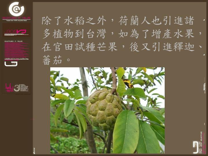 除了水稻之外,荷蘭人也引進諸多植物到台灣,如為了增產水果,在官田試種芒果,後又引進釋迦、蕃茄。