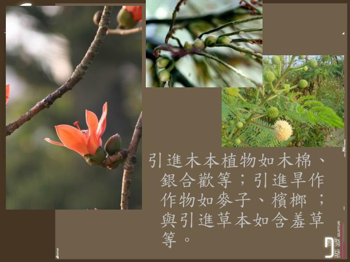 引進木本植物如木棉、銀合歡等;引進旱作作物如麥子、檳榔 ;與引進草本如含羞草等。