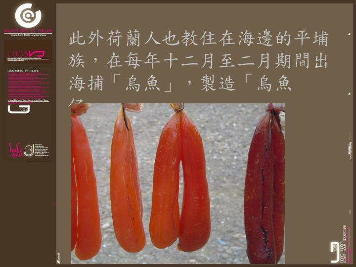 此外荷蘭人也教住在海邊的平埔族,在每年十二月至二月期間出海捕「烏魚」,製造「烏魚仔」。