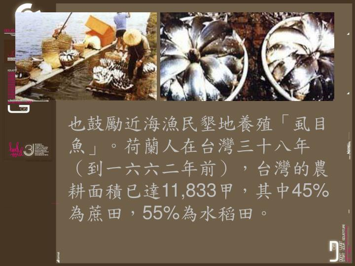 也鼓勵近海漁民墾地養殖「虱目魚」。荷蘭人在台灣三十八年(到一六六二年前),台灣的農耕面積已達