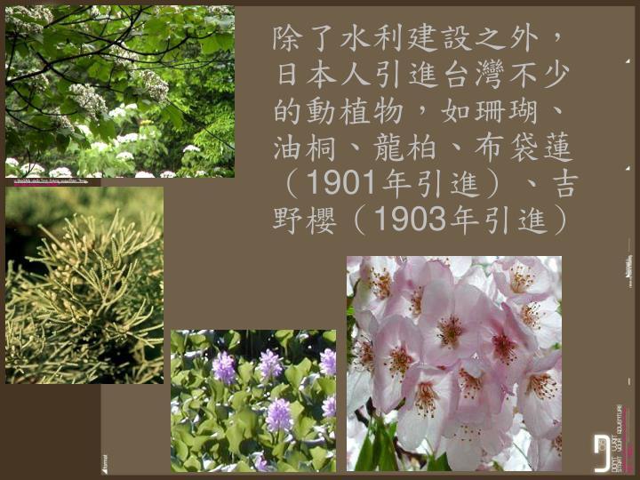 除了水利建設之外,日本人引進台灣不少的動植物,如珊瑚、油桐、龍柏、布袋蓮(