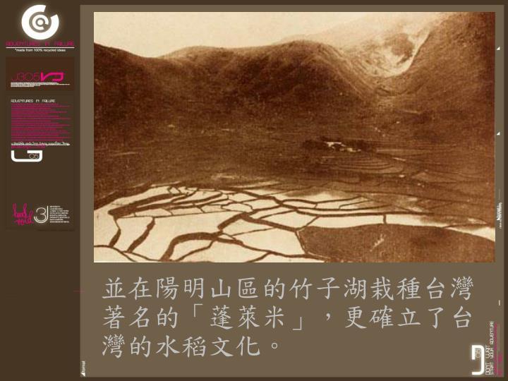 並在陽明山區的竹子湖栽種台灣著名的「蓬萊米」,更確立了台灣的水稻文化。