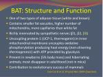 bat structure and function