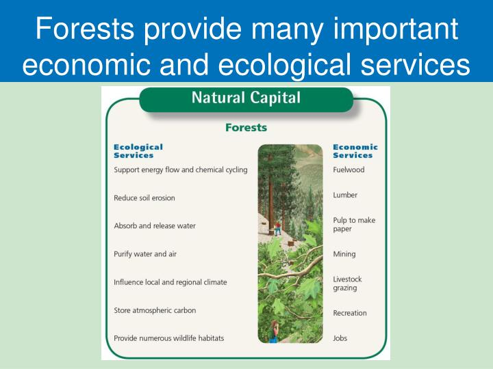 Forests provide many important economic and ecological services
