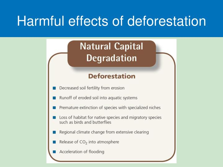 Harmful effects of deforestation