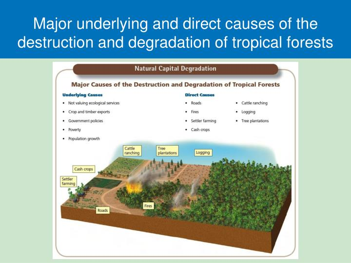 Major underlying and direct causes of the destruction and degradation of tropical forests