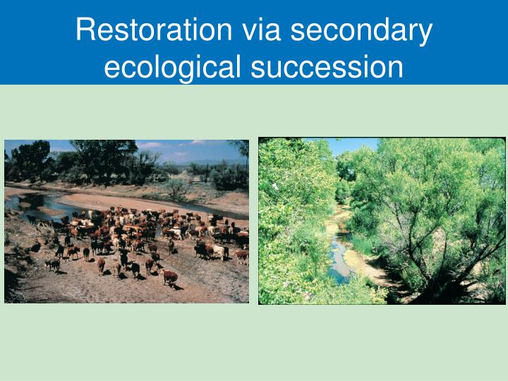 Restoration via secondary ecological succession