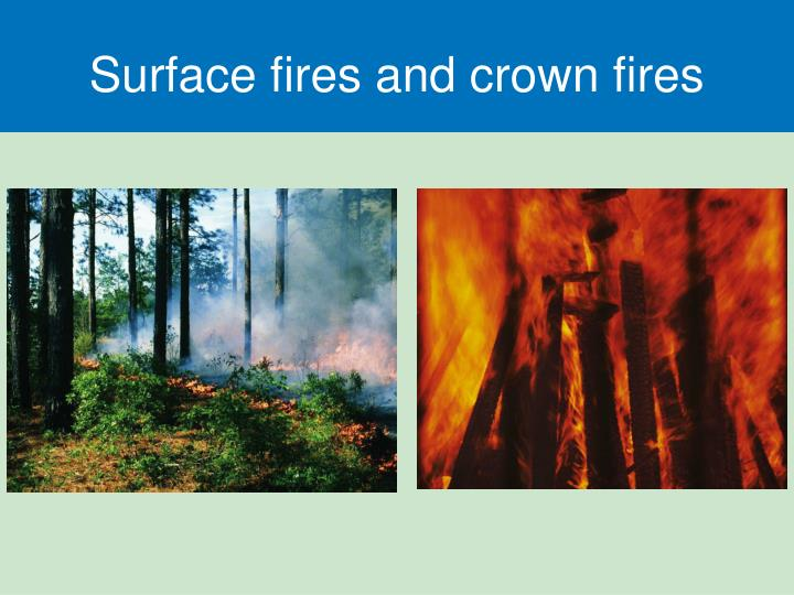 Surface fires and crown fires