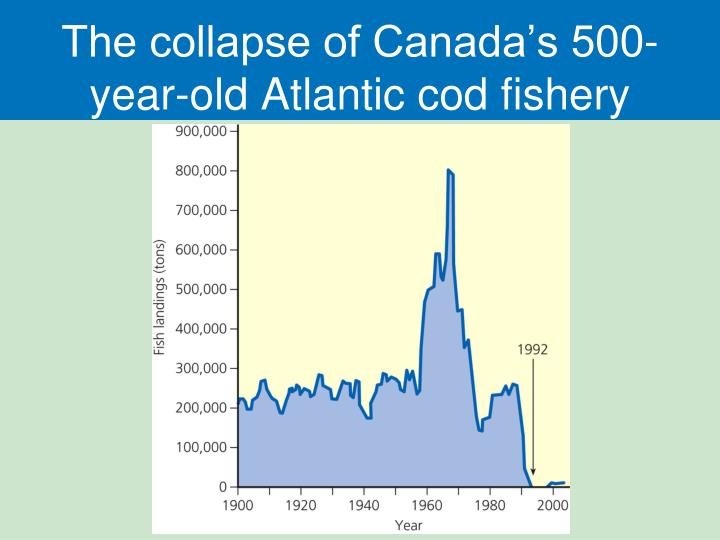 The collapse of Canada's 500-year-old Atlantic cod fishery