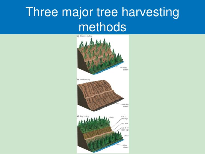 Three major tree harvesting methods
