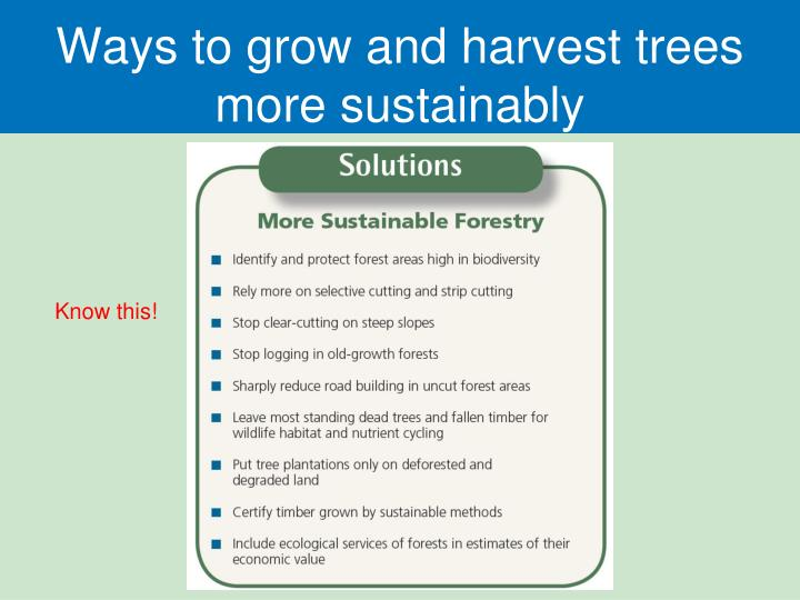 Ways to grow and harvest trees more sustainably