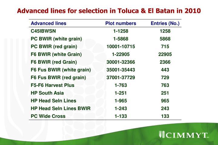 Advanced lines for selection in Toluca & El Batan in 2010