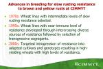 advances in breeding for slow rusting resistance to brown and yellow rusts at cimmyt