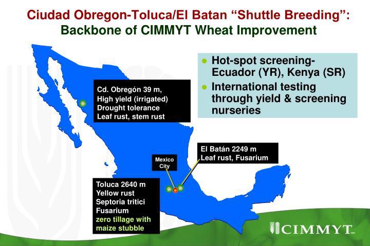 "Ciudad Obregon-Toluca/El Batan ""Shuttle Breeding"":"