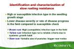 identification and characterization of slow rusting resistance