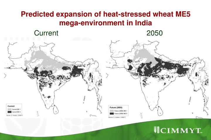 Predicted expansion of heat-stressed wheat ME5 mega-environment in India
