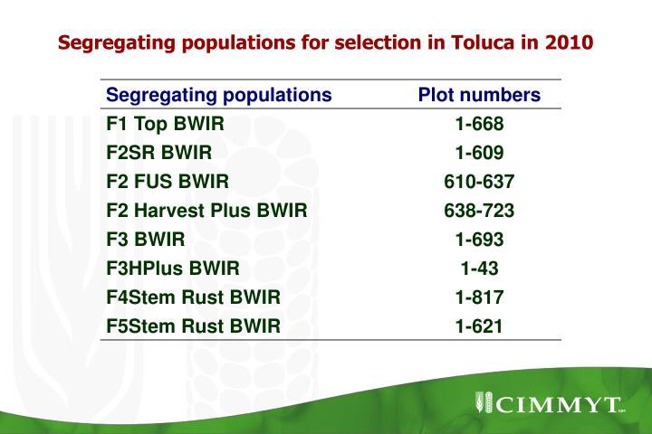 Segregating populations for selection in Toluca in 2010