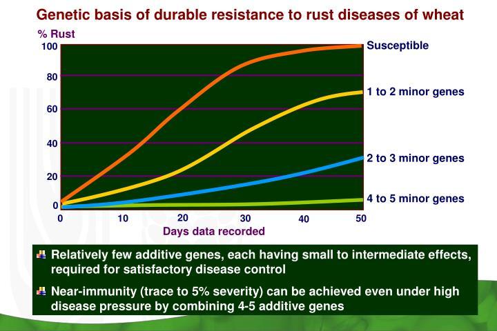 Genetic basis of durable resistance to rust diseases of wheat