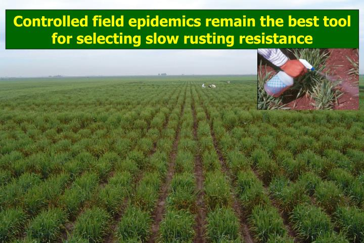 Controlled field epidemics remain the best tool