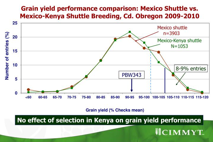 Grain yield performance comparison: Mexico Shuttle vs. Mexico-Kenya Shuttle Breeding, Cd. Obregon 2009-2010