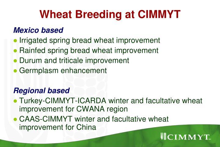 Wheat Breeding at CIMMYT
