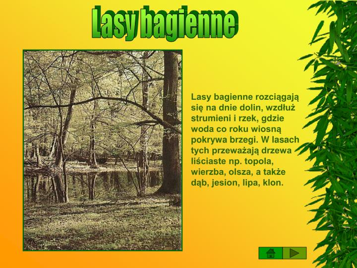 Lasy bagienne