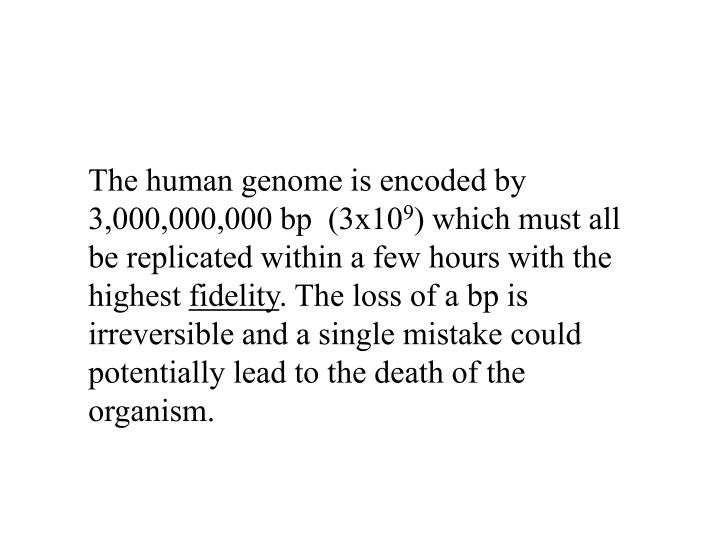 The human genome is encoded by 3,000,000,000 bp  (3x10