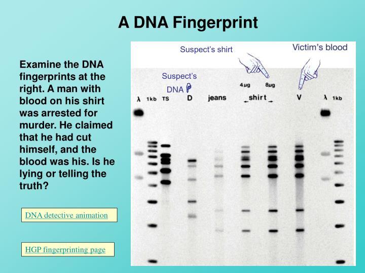 A DNA Fingerprint