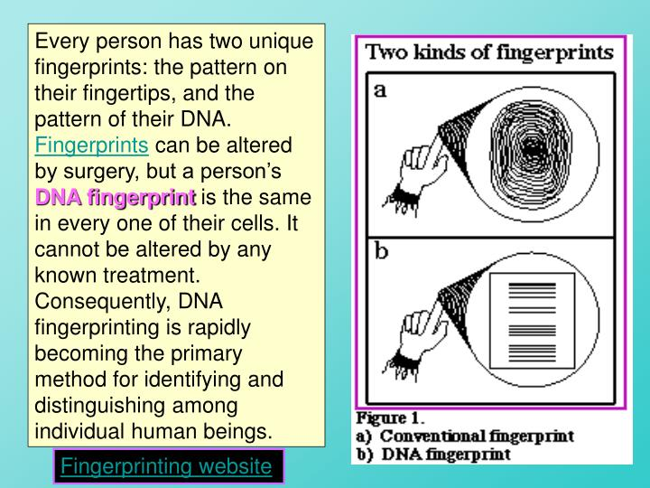 Every person has two unique fingerprints: the pattern on their fingertips, and the pattern of their DNA.