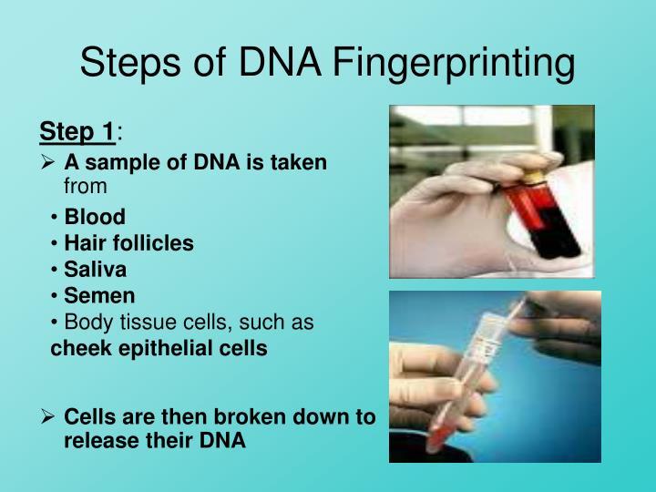 Steps of DNA Fingerprinting