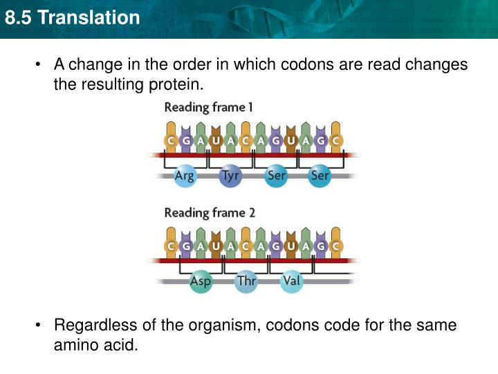 A change in the order in which codons are read changes the resulting protein.