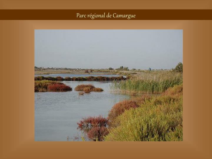 Parc régional de Camargue