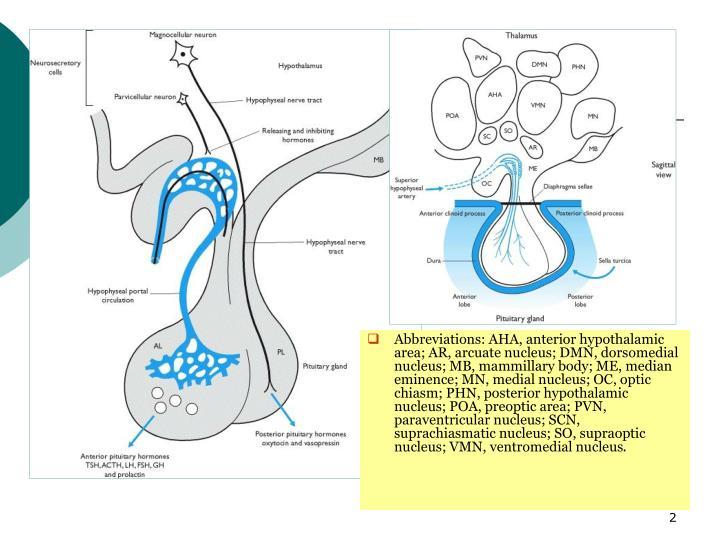 Abbreviations: AHA, anterior hypothalamic area; AR, arcuate nucleus; DMN, dorsomedial nucleus; MB, mammillary body; ME, median eminence; MN, medial nucleus; OC, optic chiasm; PHN, posterior hypothalamic nucleus; POA, preoptic area; PVN, paraventricular nucleus; SCN, suprachiasmatic nucleus; SO, supraoptic nucleus; VMN, ventromedial nucleus