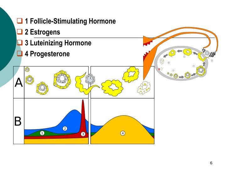 1 Follicle-Stimulating Hormone