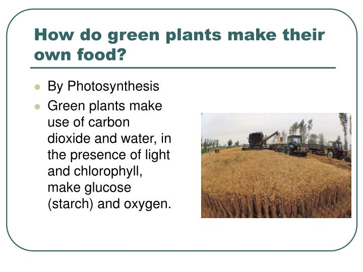 How do green plants make their own food?